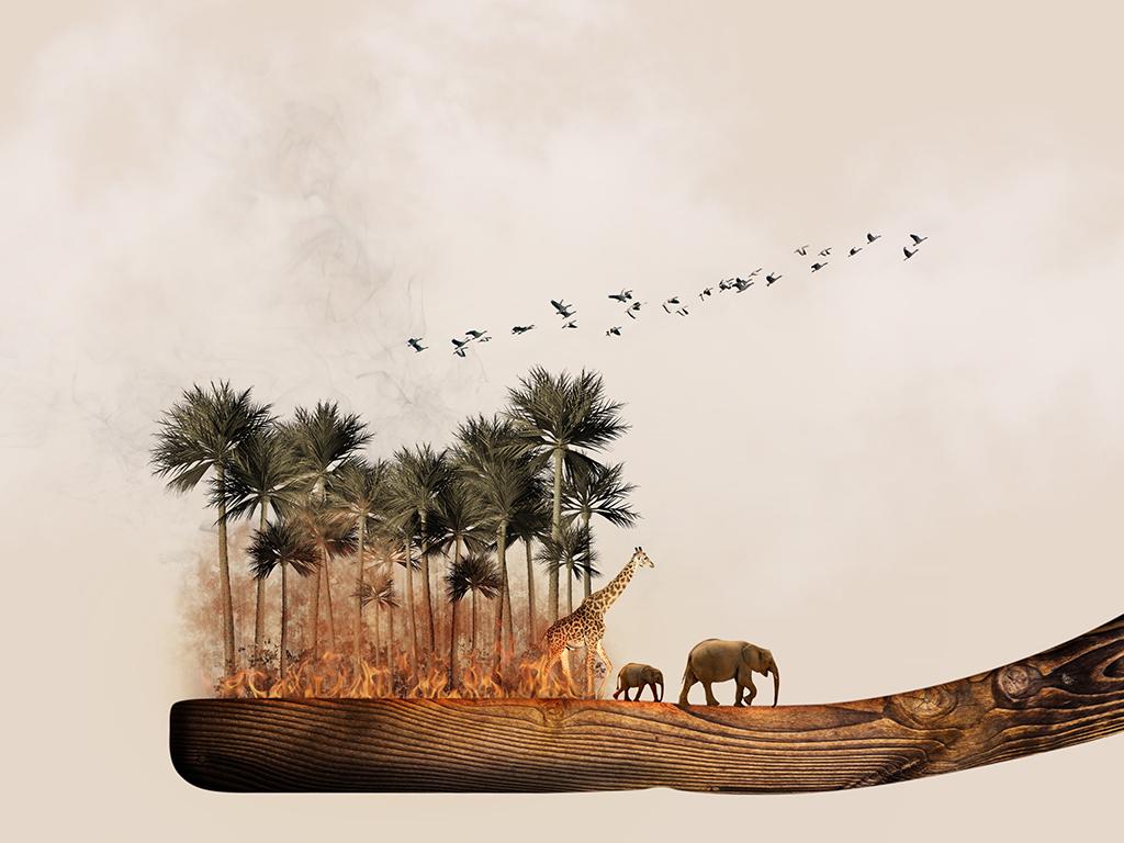 africa-1424005.jpg