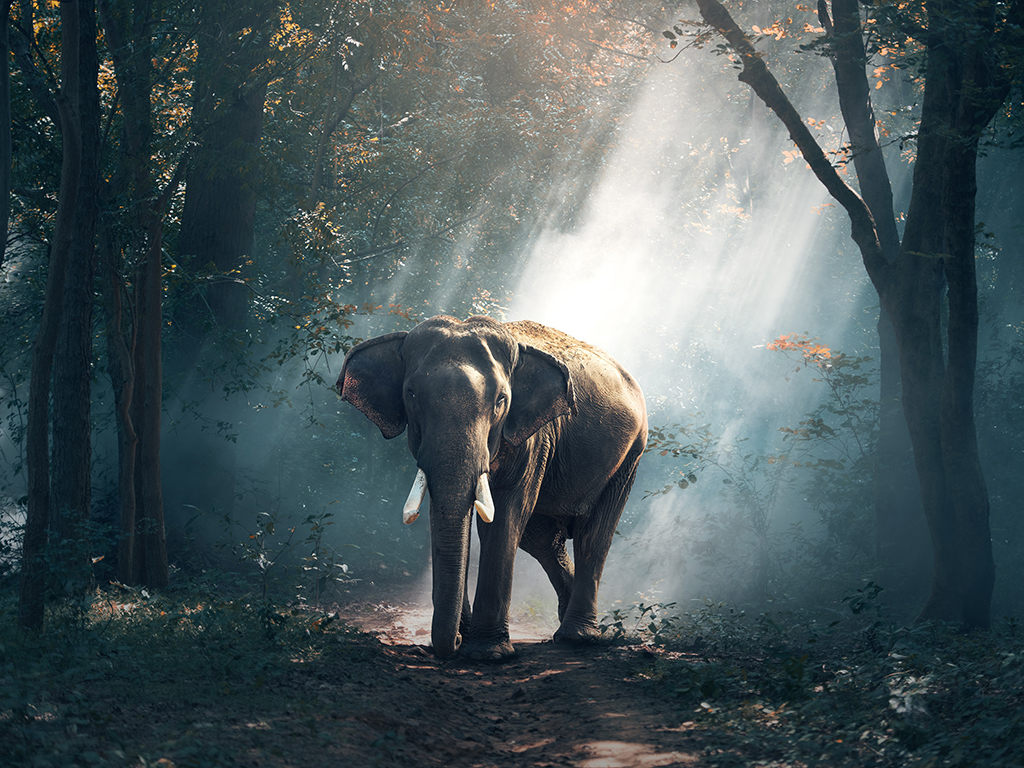 elephant-1822636.jpg
