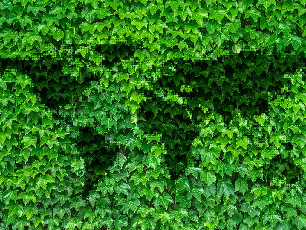 leaves-2874583.jpg