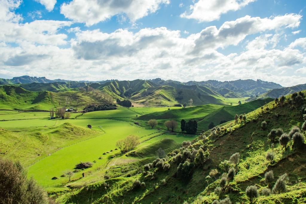 Nova_Zelandija_1.jpg