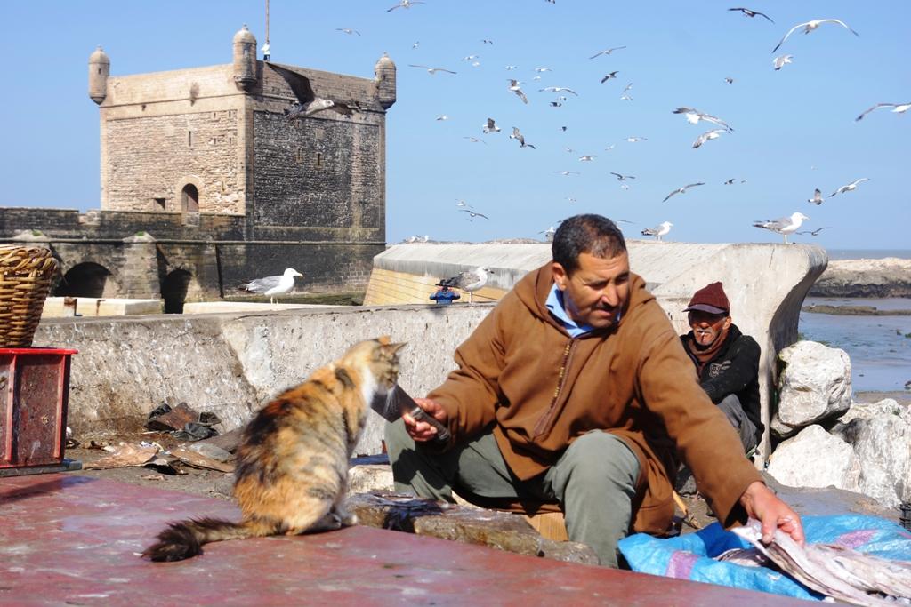 Maroko_Morocco_5.JPG