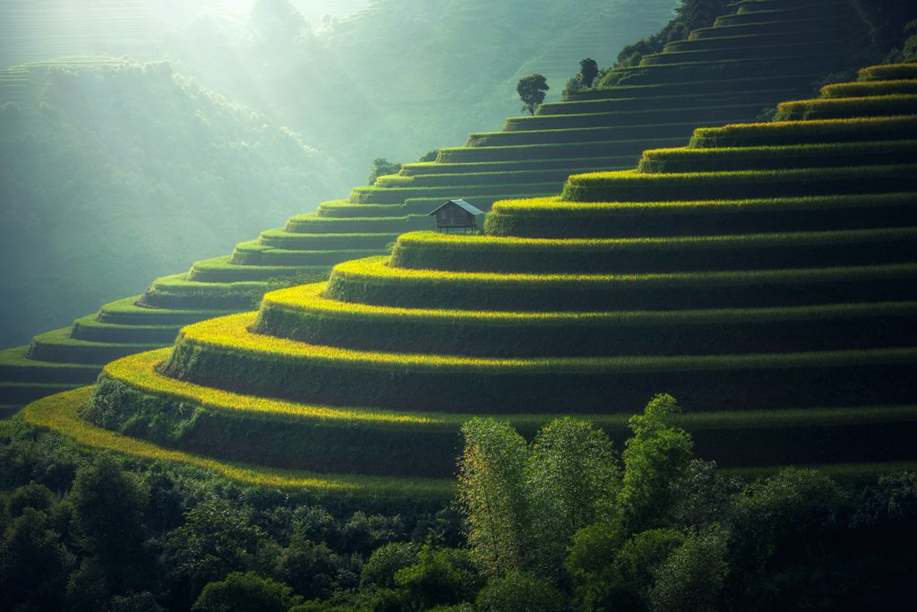 Sustainable_travelling_-_scenic-view-of-rice-paddy-247599.png