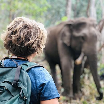 Reševanje slonov na Tajskem