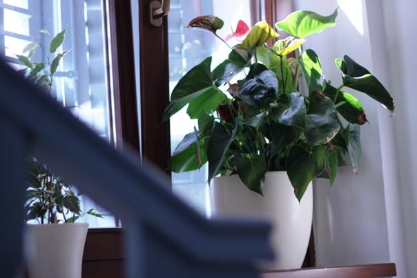 80_Youth_Hostel_Alieti_13_.jpg