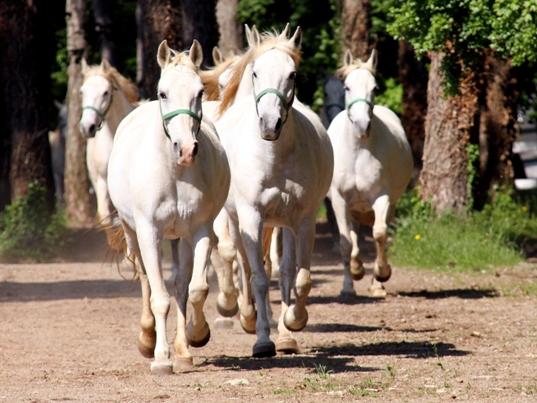 43_Horses_01_Foto_Terhi_Paavola.jpg
