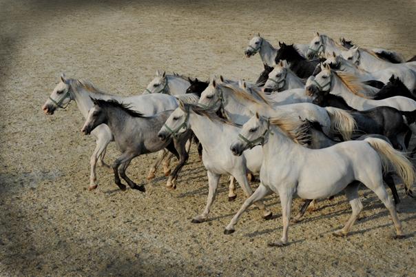 43_Horses_05_Foto_Sibil_Slejko.jpg