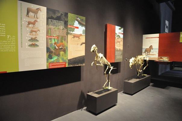 43_Museum_Lipikum_02.jpg
