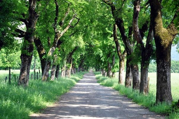 43_Tree_Avenue.jpg