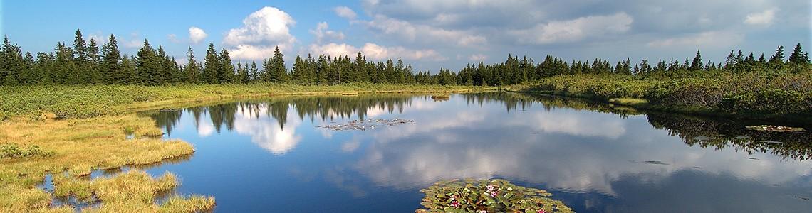 Ribnica Lake - Slovenia